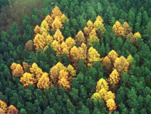 La epopeya del bosque, por Paulino Arguijo de Estremera